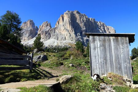A black and white cat in the mountains of the Dolomites in South Tyrol