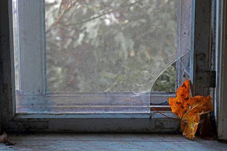 An autumn leaf reads on an old broken window.