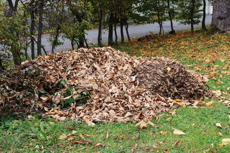 A large pile of autumn leaves in front of a building. In autumn there are lots of foliage