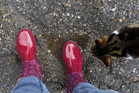 Red rubber boots, a heart as a rain puddle and a curious cat Фото со стока - 134269854