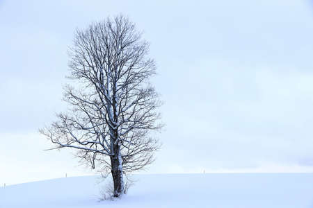 Snowy landscape with a tree in winter