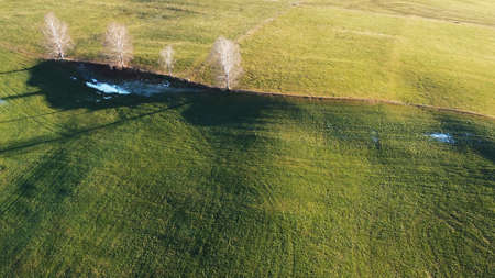 Drone photo of a meadow with trees in winter