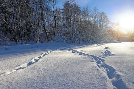 Winter landscape in Bavaria with animal tracks in high snow against the light of the sun Фото со стока