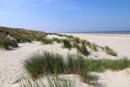 White sandy beach with tall grasses on the coast of North Sea island Langeoog in Germany