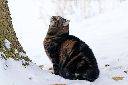 A small fat cat sits in the snow and looks at a tree