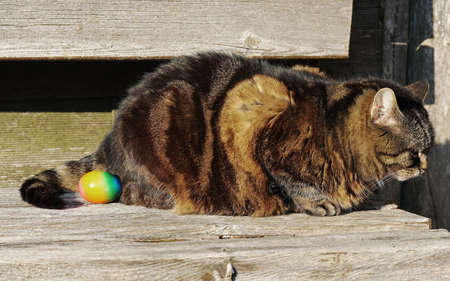 A cat and an Easter egg. Not only Easter bunnies lay eggs