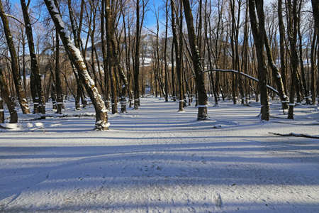 A flooded forest with ice surface and light and shadow in winter Standard-Bild