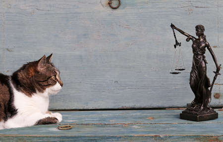 The rights of animals. A cat and a Justitia figure on a wooden background