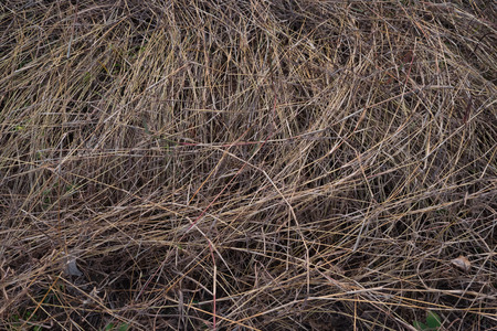 feeble: dying grass