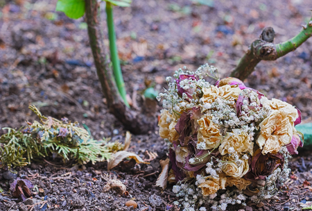 wilted: wilted bouquet