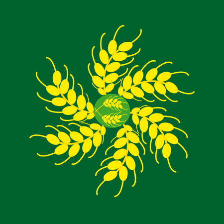 Ears of barley on a green background. Vector illustration.