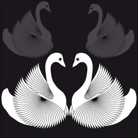 White swans on black background. Vector illustration.