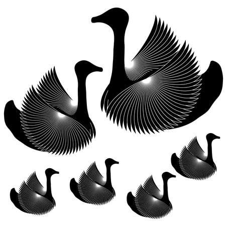 swans: Black swans on white background. Vector illustration. Illustration