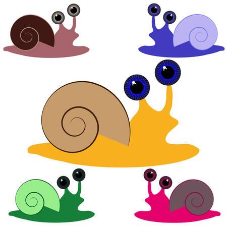 Color snail on white background. Vector illustration.