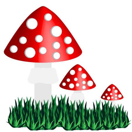 Toadstool isolated on white background. Illustration