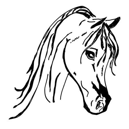 Beautiful horse head Silhouette isolated on white background. Vector illustration.