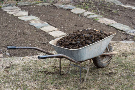 Horse manure and garden wheel on garden. Soil fertilization.