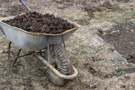 Horse manure and garden wheel on garden. Soil fertilization and pile of manure