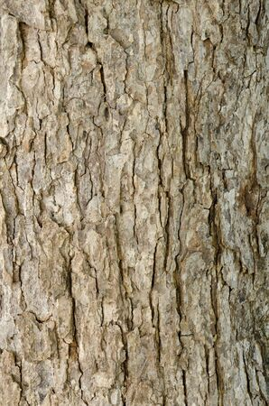 Tamarind tree bark Stock Photo