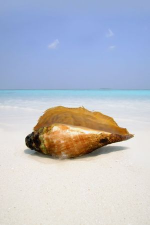 Big sea shell lying on the white coral sand beach against  sea and sky background ; Indian ocean, Maldives, Meedhupparu Island;April 2006; Stock Photo