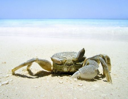 ashore: Crab ashore