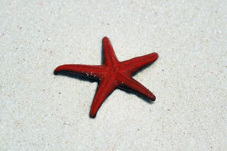 Smallred starfish laying  upside down on the water edge Stock Photo