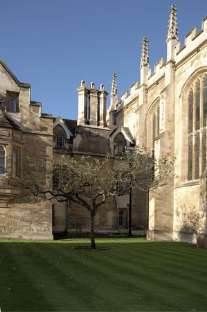 sceptre: Newton apple tree in front of trinity college, Cambridge Stock Photo
