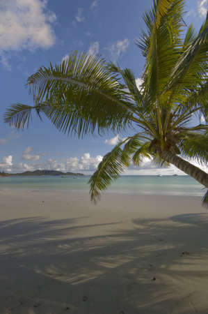 Coconut palm with  shadow in Anse cote d'Or, praslin, Seychelles Stock Photo - 884094