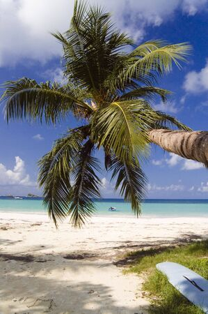 Coconut palm tree hangs out over sandy tropical beach, Cote D'or , Praslin, Seychelles Stock Photo - 961038