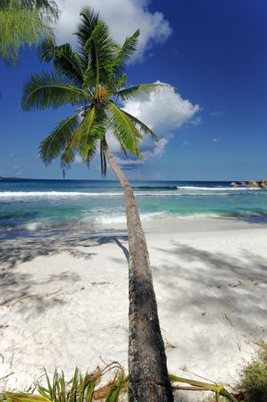 Coconut palm overhang pristine tropical beach, Praslin, Seychelles Stock Photo - 965462