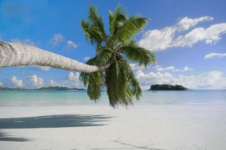 Pristine beach of Praslin tropical resort island Stock Photo - 1106837