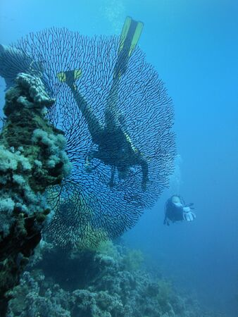 Gorgonaria and group scuba divers photo