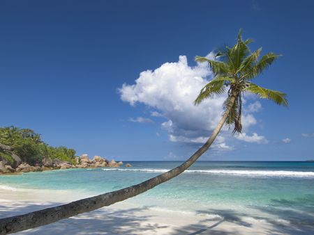 overhang: Stunning picture of palm tree overhang pristine white sand tropical beach and blue green waters of Indian ocean slapping the isolated shoreline, La Digue Island, Seychelles