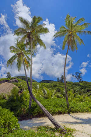 Secluded  Palm-studded Grand Anse beach of La Digue island, Seychelles photo
