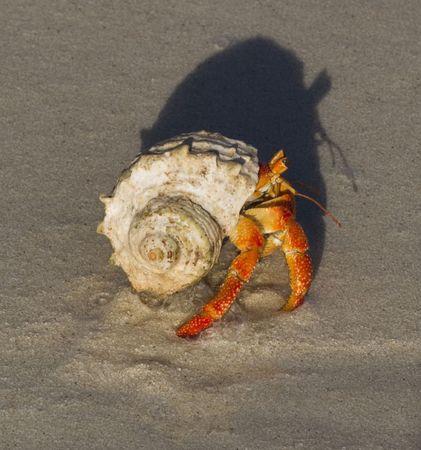 closeups: Hermit crab close-up