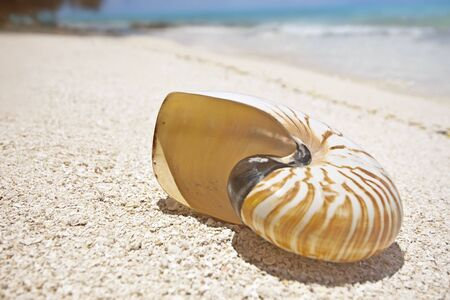 Nautilus shell on white sand beach of tropical holiday island , Maldives photo