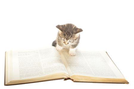 reference book: peque�o gatito inspeccionando el gran libro de referencia extranjera como si leerla  Foto de archivo