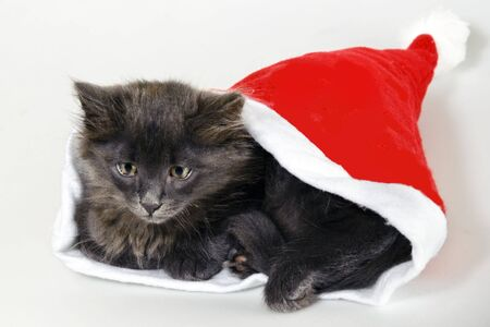 Cute fluffy kitten sitting in Santas cap photo