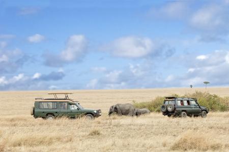 Herde von afrikanischen Elefanten auf der Straße zwischen zwei Safarifahrzeugen, Masai Mara National Reserve, Kenia, Ostafrika