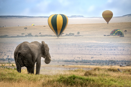 masai: African elephant ,  foggy morning, hot air balloons landing on background,  Masai Mara National Reserve, Kenya Stock Photo