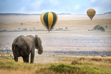 Elefante africano, niebla por la mañana, globos de aire caliente de aterrizaje en el fondo, la Reserva Nacional de Masai Mara, Kenia