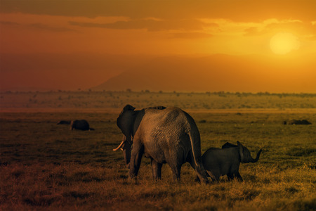 large family portrait: Group of African elephants  Loxodonta africana in Amboseli National Park, Kenya Stock Photo