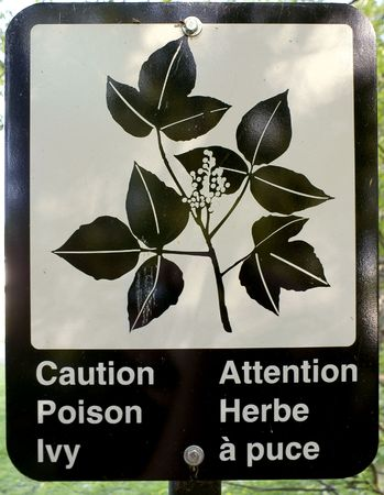 A sign in a public park warning of the presence of poison ivy in both French and English.