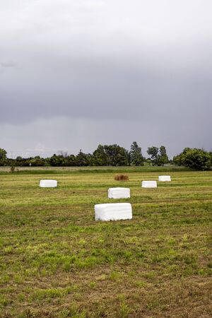 Five bales of hay, wrapped in plastic lie in a farmers field waiting to be collected underneath a stormy sky. photo