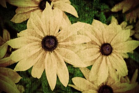 distressed: A grunge style, distressed, aged background image of flowers.