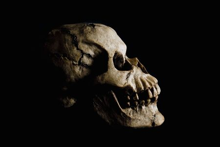 Side view (profile) of ancient human skull in deep shadow.