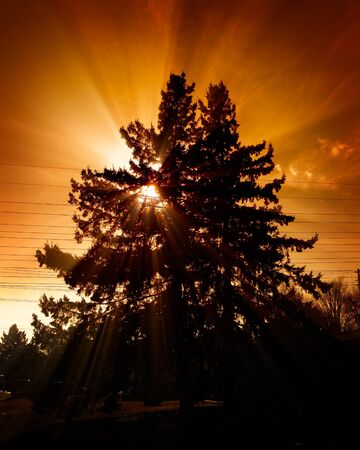 Two tall pine trees silhouetted against a red-orange sky with the rays of a setting sun shining through their branches.