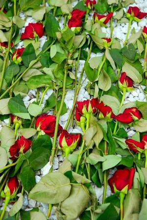 wilting: Marchitamiento rosas descarta sobre el terreno. Foto de archivo