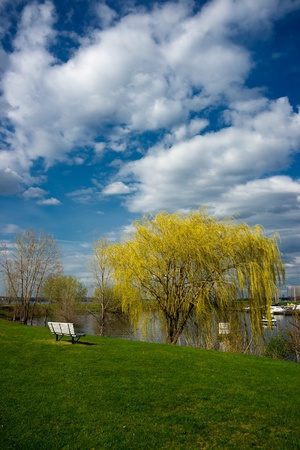 A yellow weeping willow stands near a park bench and the waters edge. photo