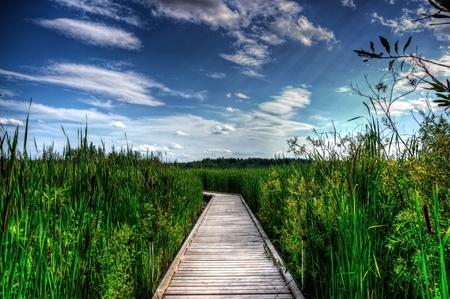 Een houten boardwalk snijdt de het hoge riet, gras en kat-staarten van een begroeid moeras. Stockfoto